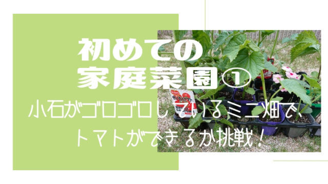 初めての家庭菜園①