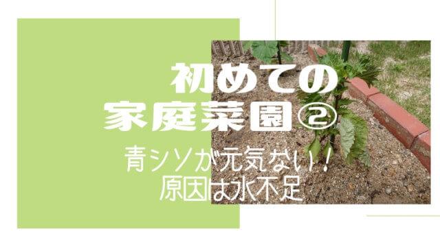 初めての家庭菜園②
